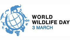 it-s-time-to-get-serious-about-wildlife-crime-2015-world-wildlife-day