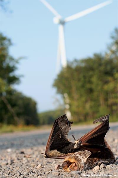 Bats and windmill fatalities
