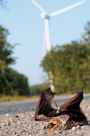 Bat flying in the sky