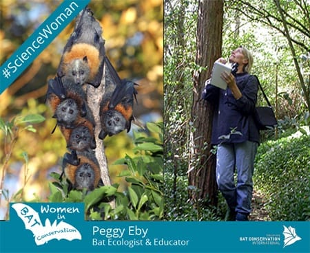 Peggy Eby watching Grey-headed flying-foxes