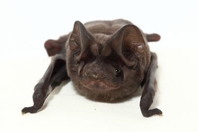 B Bat Closeup DS