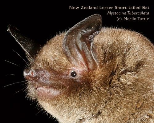 Portrait of Bat Roost