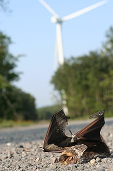 Bat flying in the sky