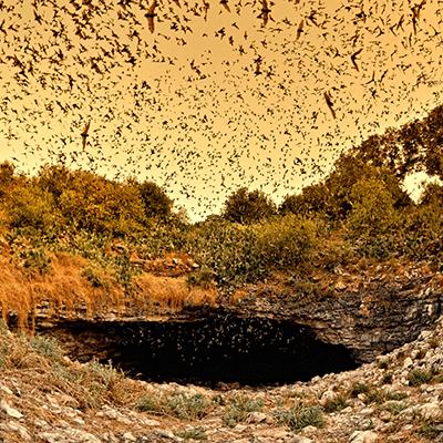 Bracken Cave